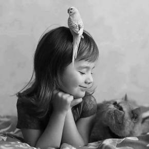 Amitie chat oiseau