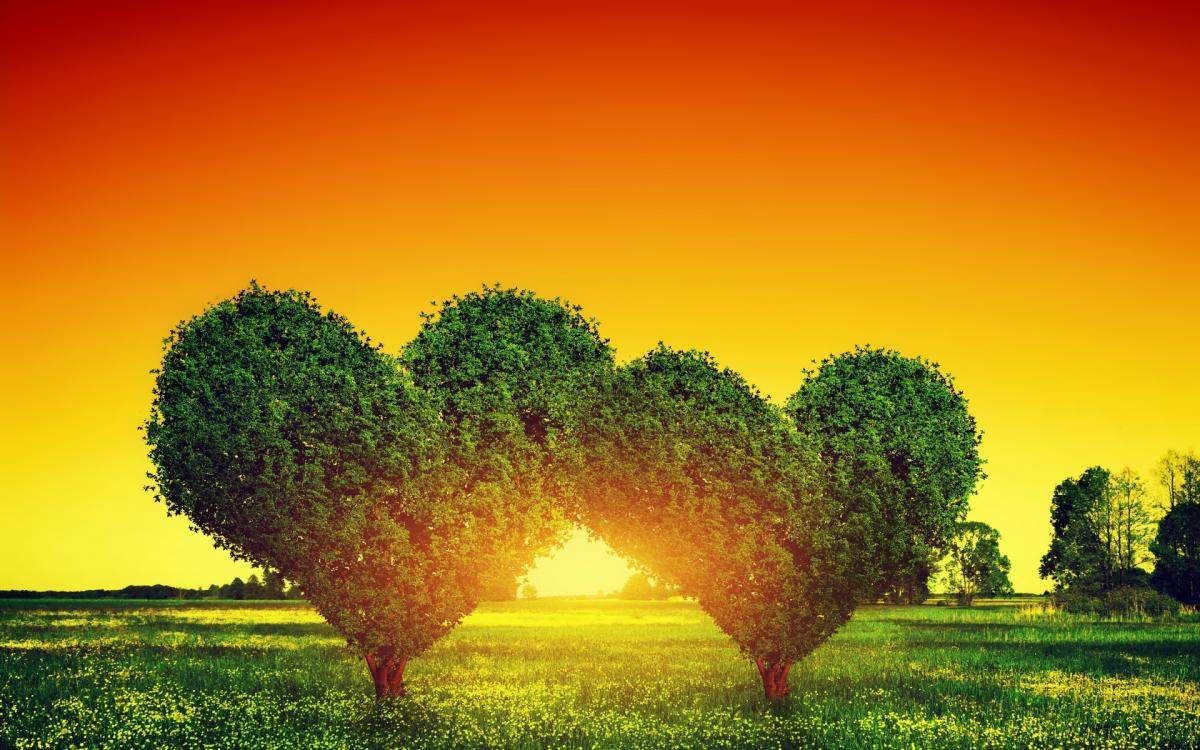 Amour arbres