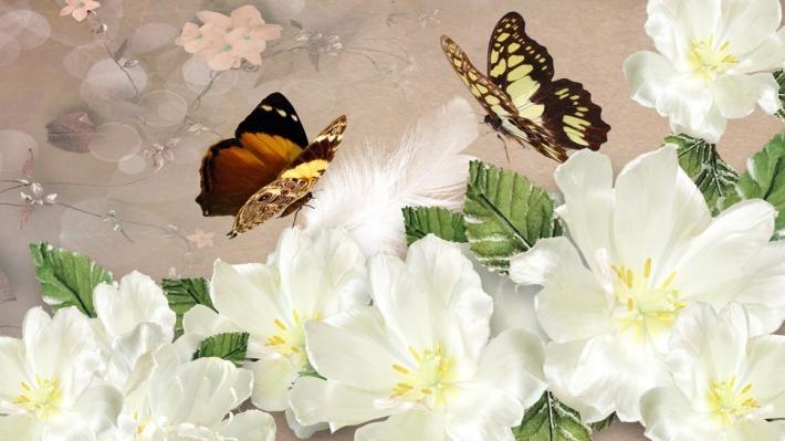 Belles fleurs blanches
