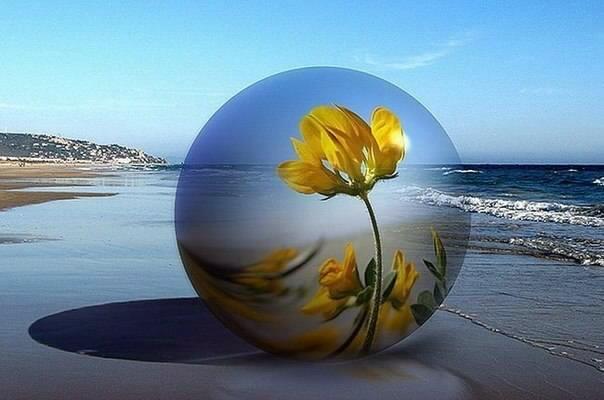 Bulle fleur mer