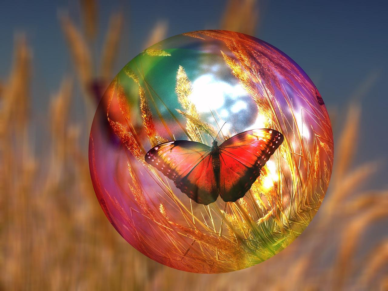 Bulle papillon