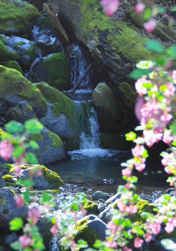 Cascade avec fleurs