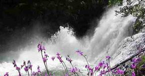 Cascade fleurs
