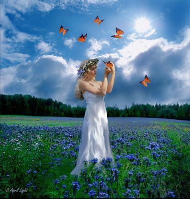Champ de fleurs papillons