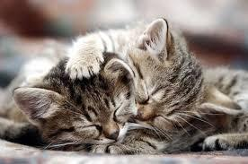Chats tendresse