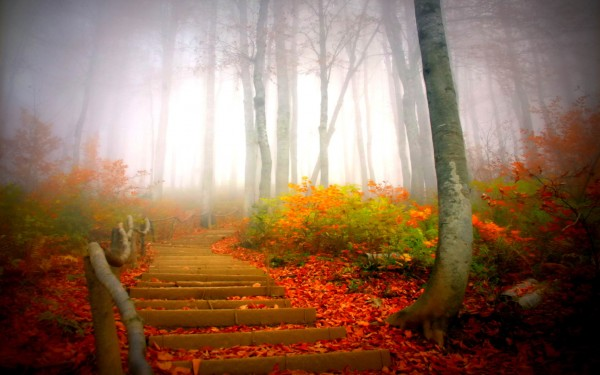 Chemin bois