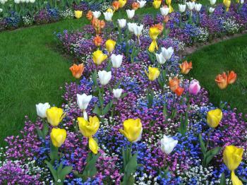 Chemin de fleurs