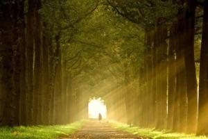 Chemin de lumiere 1