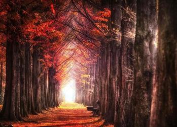 Chemin foret