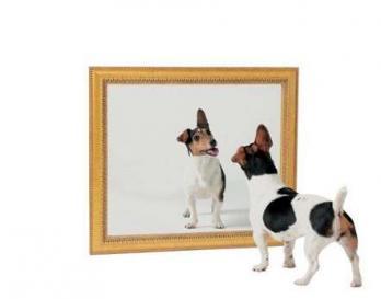 Chien miroir
