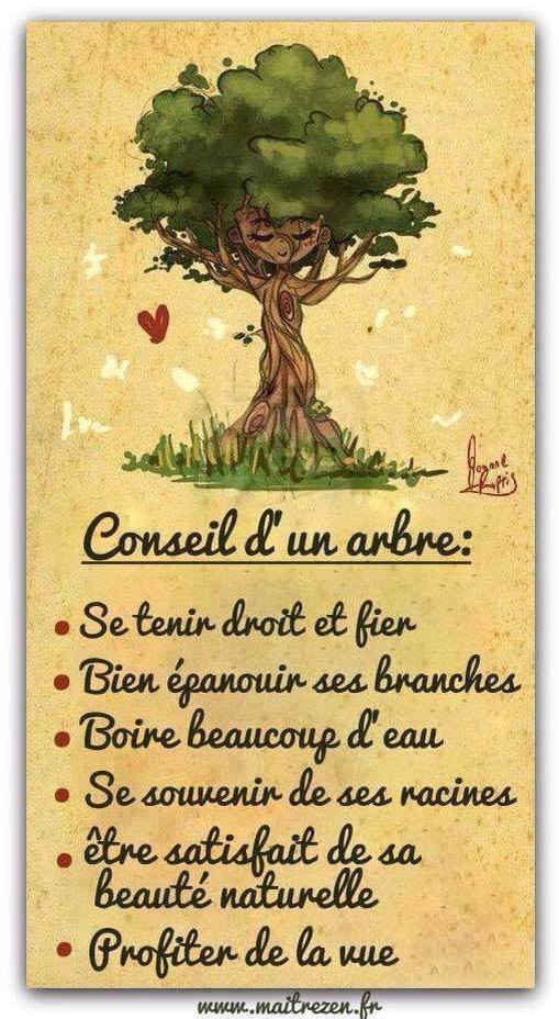 Conseil d un arbre