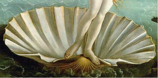 Coquille naissance