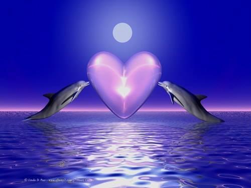 Dauphins coeur