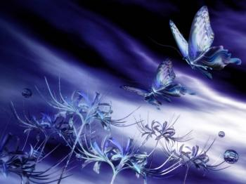 Envol papillons
