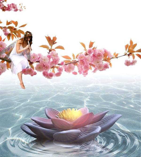 Fee lotus