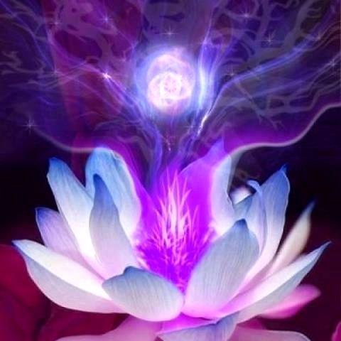 Flamme violette lotus