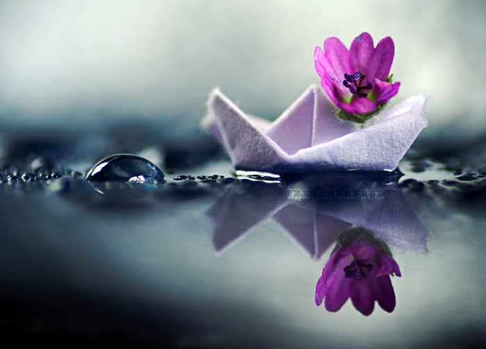 Fleur bateau
