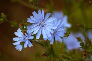 Fleur by kuschelirmel