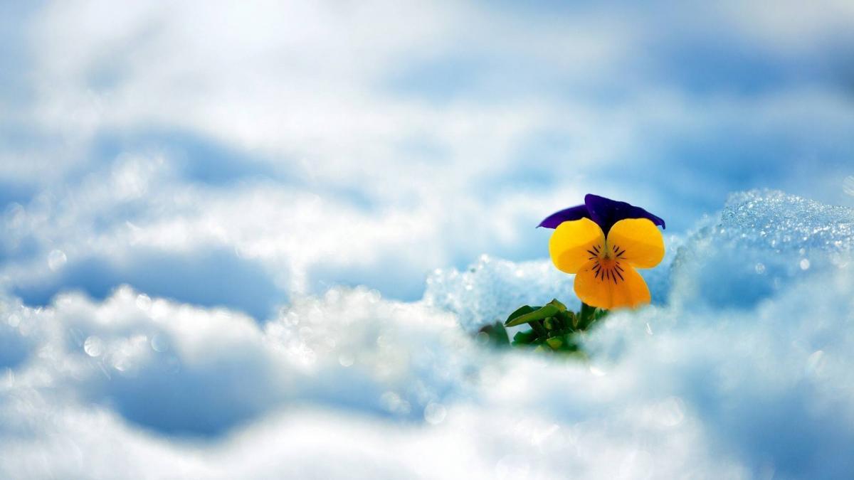 Fleur ciel
