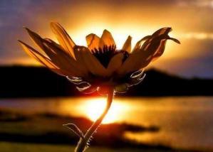 Fleur coucher soleil