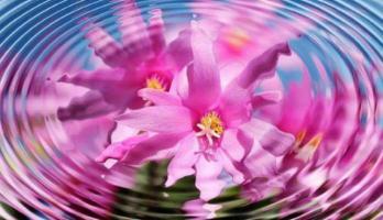 Fleur eau