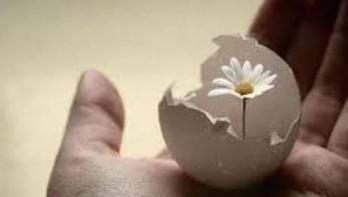 Fleur oeuf