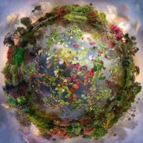 Gaia fleurs