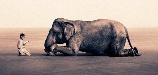 Humilite elephant