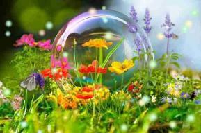Jardin bulle