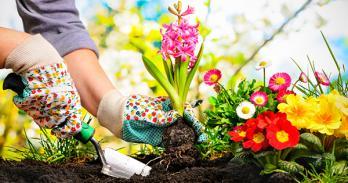 Jardinier paix