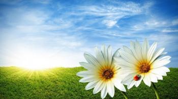 Juillet fleurs