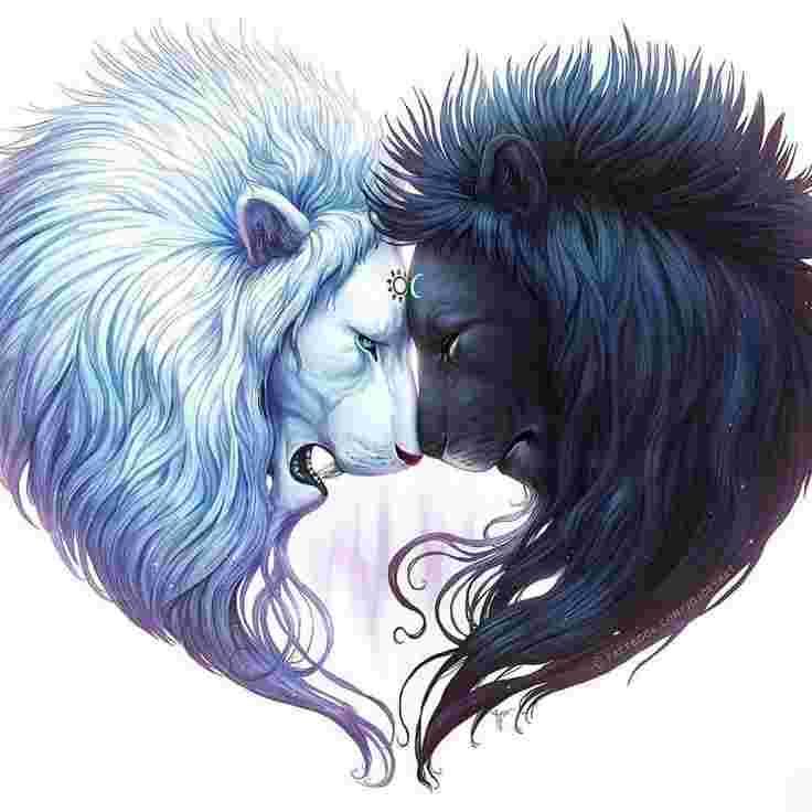 Lions blanc et noir