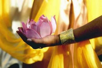 Lotus paix