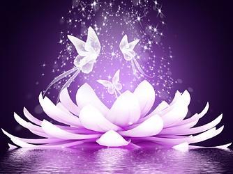 Lotus papillon