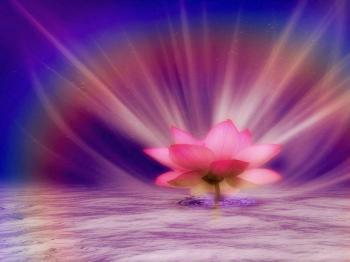 Lotus rayonnant