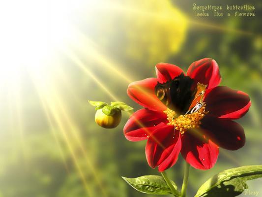 Lumiere fleur