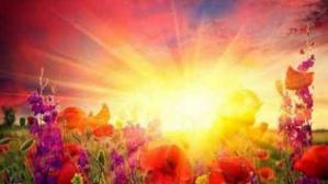 Lumiere soleil fleurs