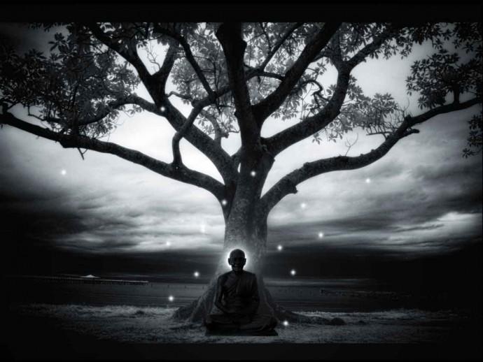 Meditation zen arbre
