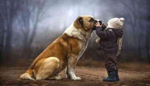 Meilleur ami de l homme