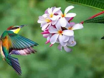 Oiseau fleur