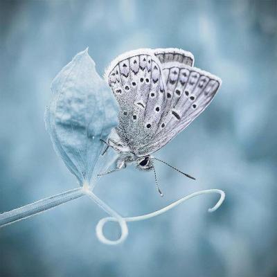 Papillon blanc 1