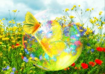 Papillon bulle