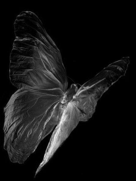 Papillon envol