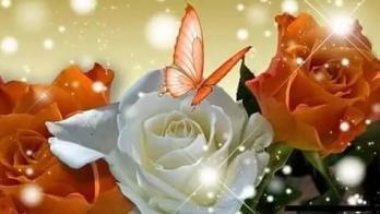 Papillon roses