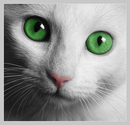 Petit chat yeux verts