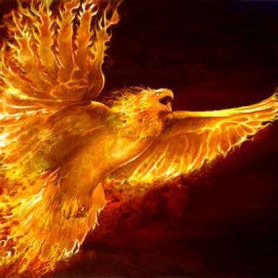 Phoenix rising 1