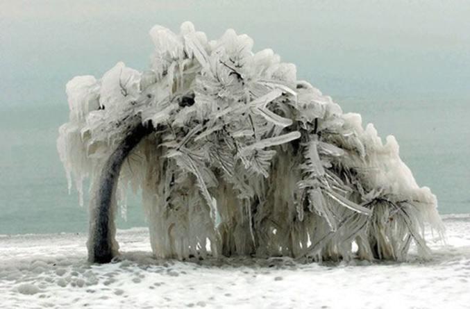 Plier sans rompre arbre neige