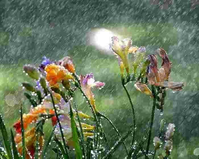 Pluie fleurs
