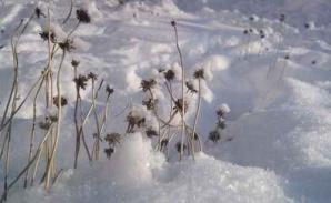 Presence neige
