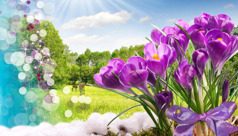 Renouveau printemps